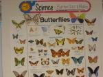 Butterfly on Butterflies